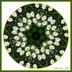 """The joy of anything, from a blade of grass upwards, is to fulfill its created purpose."" (martian cat) Tags: daisy macro martiancatinjapan allrightsreserved flower nature daisies allrightsreserved martiancatinjapan martiancatinjapan closeup flowers allrightsreserved allrightsreserved onwhite inspirational spunflowers kaleidoscope martiancatinjapan martiancat creativity"