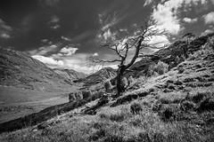JHF0003824 (janhuesing.com) Tags: rot inverie scotland wildlife hiking highlands mallaig knoydart landscape nature outdoor