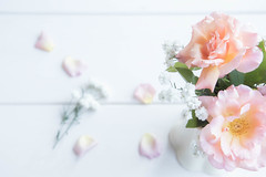 259/366: From the garden (judi may) Tags: 366the2016edition 3662016 day259366 15sep16 stilllife flowers roses gypsophila highkey pastel pastelcolours delicate soft white whitebackground wood canon7d pretty dof depthoffield bokeh
