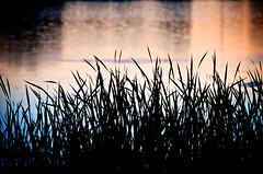 grass (lynn.h.armstrong) Tags: camera blue sunset orange ontario canada black reflection art wet water grass silhouette creek lens geotagged photography photo aperture nikon long flickr purple south images lynn h getty nikkor armstrong stormont sault ingleside twitter tumblr hooples d7000 lynnharmstrong