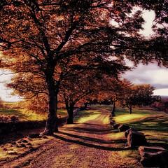 An autumn walk(explore) (kenny barker) Tags: autumn colour lumix scotland falkirk bonnybridge scottishlandscape panasoniclumixgf1 kennybarker
