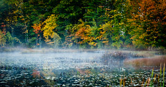 Berry Pond (kenbruger) Tags: morning autumn mist fall nikon newhampshire berrypond d700