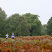 Shock Absorber Women Only 5K and 10K - Richmond Park October 2012