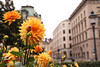 stockholm (d_rimbo) Tags: city trip travel urban flower architecture europe sweden stockholm mercer adventure kungstradgarden scandanavia