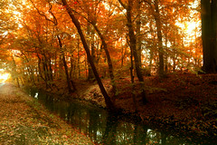 liquid gold (Zino2009 (bob van den berg)) Tags: road autumn trees light cold nature water forest point gold dof pov herfst poor natuur tunnel vanishing kalt wald liquid bume deventer bobvandenberg thesecretlifeoftrees douwelerkolk zino2009