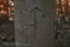 Tiwaz  (Myrkwood666) Tags: wood tree forest symbol boom bos wald baum tyr pagan rune futhark tiw tir teiwaz asatru ziu tiwaz seelenwinter mrkskygge myrkwood666
