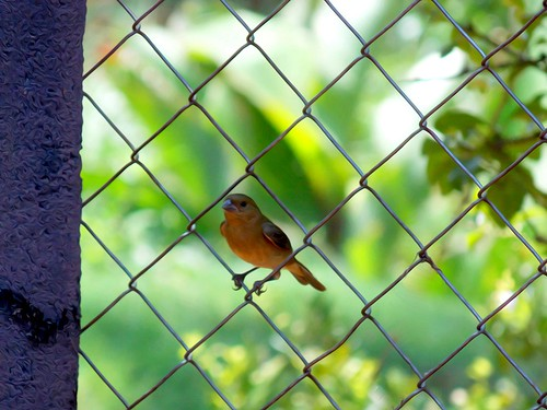 Simple and beautiful images of life (Fabianni L. Ribeiro) birds aves pssaros