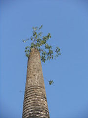Growing Column (mikecogh) Tags: heritage temple host column growing sukhothai watchanglom