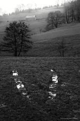 Vu (Stphane Dgremont) Tags: light blackandwhite black tree art fog canon dark raw arbre brouillard ef24105f4l blackandwhiteonly bwemotion eos5dmarkii stephanedegremont wwwstphanedgremontviewbookcom