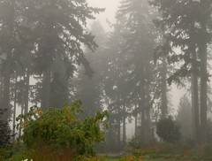 A Foggy Morning (careth@2012) Tags: fog scenery britishcolumbia naturesspirit floraaroundtheworld