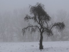Spooky old appletree (:Linda:) Tags: schnee winter snow silhouette germany village thuringia baretree appletree apfelbaum nobw brden