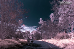 walking in the dream (Eric 5D Mark III) Tags: california road pink light shadow sky people usa cloud tree grass smart canon landscape photography losangeles couple unitedstates walk sony dream adapter infrared arcadia r72 laarboretum ericlo 720nm tse17mmf4l tse17l metabones nex5n eftonex