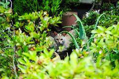 Today's Cat@2016-07-18 (masatsu) Tags: cat pentax catspotting mx1 thebiggestgroupwithonlycats