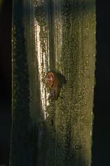 Runter geht schneller! (Klaus Vetter) Tags: grashalm tier wassertropfen schnecke sommer tiere