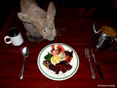 Dr. Takeshi Yamada and Seara (Coney Island Sea Rabbit) at the East Ocean Buffet Chinese restaurant in Brooklyn, NY on April 3, 2016.  20160403Sun DSCN4952=0020C. sushi, Peking duck, BBQ ribs, beef, spinatch (searabbits23) Tags: searabbit seara takeshiyamada  taxidermy roguetaxidermy mart strange cryptozoology uma ufo esp curiosities oddities globalwarming climategate dragon mermaid unicorn art artist alchemy entertainer performer famous sexy playboy bikini fashion vogue goth gothic vampire steampunk barrackobama billclinton billgates sideshow freakshow star king pop god angel celebrity genius amc immortalized tv immortalizer japanese asian mardigras tophat google yahoo bing aol cnn coneyisland brooklyn newyork leonardodavinci damienhirst jeffkoons takashimurakami vangogh pablopicasso salvadordali waltdisney donaldtrump hillaryclinton polarbearclub