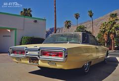 Yellow Bird Under the Desert Sun (Hi-Fi Fotos) Tags: ford thunderbird tbird vintage american classiccar yellow summer palmsprings california palm trees nikon d5000 hififotos hallewell