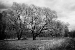 *** (pszcz9) Tags: polska poland przyroda nature pejza landscape drzewo tree wierzba willow droga road wiosna spring sony a77 blackandwhite monochrome beautifulearth bw