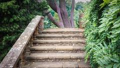 Stairway to Haven (Brian Negus) Tags: nationaltrust stone foliage uptonhouseandgardens tree steps stairs warwickshire lichen