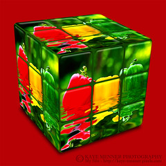 Kitchen Cube by Kaye Menner (Kaye Menner) Tags: photography digitalart kitchencube kitchen cube square hexahedron peppers bellpeppers capsicum capsicumafloat water reflections redbackground fruit vegetables kayemennerphotography kayemenner colorful colorfulcube greenpepper yellowpepper redpepper threepeppers solanaceae familysolanaceae bellpepper colorfulfruits food wet healthy kayemennerfruit primarycolors green red yellow vivid vibrant fruitart kitchenart cubed
