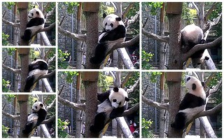 Bei in his favorite tree