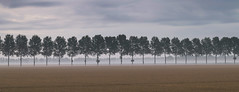 In-line (Nederland in foto's) Tags: nederlandinfotos nederland netherlands nikon paulvandevelde pdvandevelde padagudaloma outdoorphotography outdoor natuurfotografie nature naturephotographer biesbosch morning dew trees landscape landschap