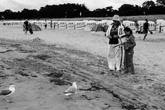 Tierliebe (hansekiki ) Tags: rgen baabe beach strand canon 5dmarkiii sw ostsee balticsea