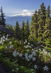Mount Rainier from the Lily Basin trail (i8seattle) Tags: mount rainier mountrainier