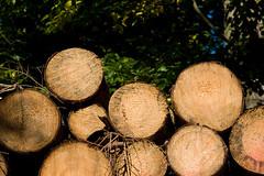 ckuchem-8291 (christine_kuchem) Tags: abholzung baum baumstmme bume einschlag fichten holzeinschlag holzwirtschaft wald waldwirtschaft