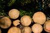 ckuchem-8291 (christine_kuchem) Tags: abholzung baum baumstämme bäume einschlag fichten holzeinschlag holzwirtschaft wald waldwirtschaft