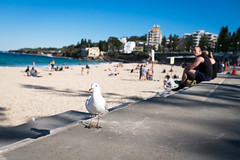 Coogee beach, Sydney (AODDY's PIXs) Tags: coogee