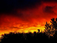 A seething sunset sky (peggyhr) Tags: peggyhr sunset clouds silhouettes trees sky orange black yellow red fiery gallery