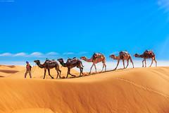 PUPA Desert Expedition 2016-01-06 (tine_stone) Tags: 2016 africa afrika expedition jnner kalendershooting landschaft marokko pupa pupadesertexpedition pantrucksat winter wste desert limitededition onlocation people team tine tinefoto kasbahmoyahut marokko|morocco morocco