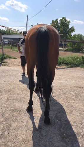 Miz Sweet 2011 16 3h Bay Mare Retained For Racing