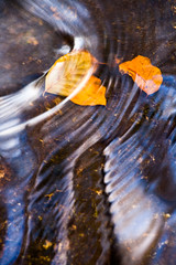Waggoners Wells, Hampshire (David Shawe) Tags: autumn water leaves patterns wells hampshire waggoners