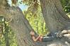 Centenarian (.:: Maya ::.) Tags: park old mountain tree nature bulgaria national pinus pirin пирин черна мура heldreichii mayaeye mayakarkalicheva маякъркаличева черната