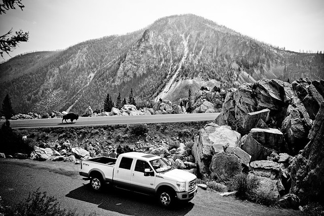 bw ford buffalo yellowstonenationalpark yellowstone bison fordtruck bisoncrossing fordcommercial fordkingrach