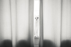 (*m22) Tags: bw cats white window animals paul dresden fenster katze