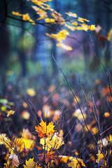 Autumn (olegarhiy) Tags: sony cz oleg a900 13518 sal135f18z zhizhin