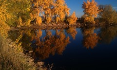 Colorado Cottonwoods (Let Ideas Compete) Tags: morning autumn trees lake reflection tree fall yellow colorado lakes twin boulder foliage cottonwood