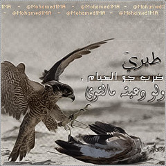 #For_BBM 10 (MA Mohamed Abdullah) Tags: ma mohamed abdullah     forbbm mohamed1ma