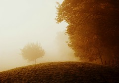 ForYou (BphotoR) Tags: morning autumn light tree silhouette fog forest fence dawn october nebel hessen hill herbst happiness powershot edge zaun rund foryou odenwald hgel morgendmmerung naturesfinest supershot g10 frdich abigfave anawesomeshot weschnitztal bphotor blinkagain bestofblinkwinners