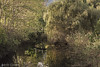 ".ethernal bridge to. (claudio ""rekoaro"" asile) Tags: longexposure trees italy lake verde green alberi canon lago eos landscapes italia seascapes piemonte filter piedmont reko 2012 mergozzo 60d nd110 fotografinewitaliangeneration rekoart rekoaro"