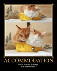 "Motivational Poster: ""ACCOMMODATION"" (tahunt) Tags: fdsflickrtoys motivation demotivation"