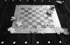autumn on the move - II (I.Dostál) Tags: autumn blackandwhite bw white black game leave canon blackwhite play board sigma move bn cb blackandwhiteonly