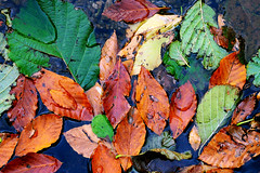 GDAK - Karagl Kamp - Artvin - Borka - 20-21 Ekim 2012 (Recep Ergin) Tags: artvin 2021 2012 ekim karagl kamp borka gdak