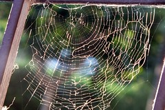 cobweb (Aquamarine97) Tags: nature spider cobweb