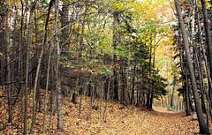 la fort perdue... (jose_abc) Tags: autumn trees canada colors automne canon october montral quebec montreal couleurs trail arbres qubec leafs montroyal chemin feuilles octobre