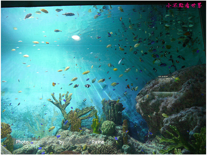 首爾COEX . 水族館