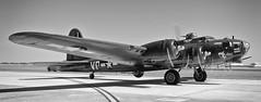 """Texas Raiders"" B-17G Flying Fortess (Bill Jacomet) Tags: show bw white black field plane flying wings texas air wwii over houston airshow b17 planes ww2 and bomber fortress warbird warplane 2012 raiders ellington b17g texasraiders"