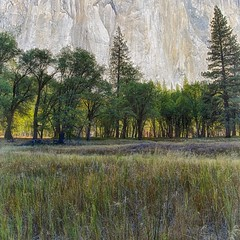 El Capitan Meadow (Kirk Lougheed) Tags: california nationalpark meadow yosemite yosemitenationalpark elcapitan yosemitevalley elcapitanmeadow